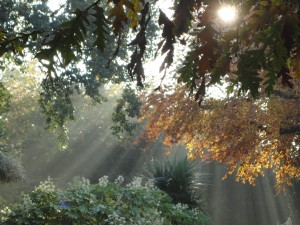 Battersea Park, sunbeams among the trees